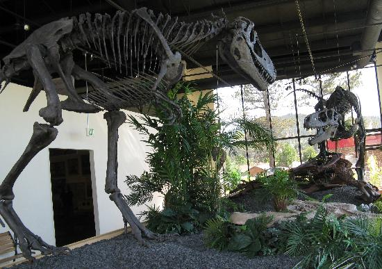 Rocky Mountain Dinosaur Resource Center : Fighting Over Prey
