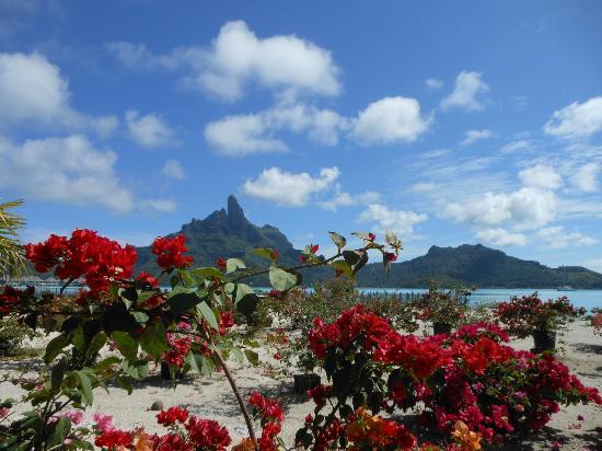 Hotel Matira : Bora Bora