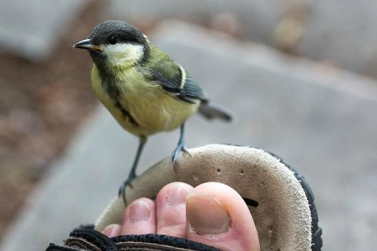 Margaret Island (Margitsziget): curious birds