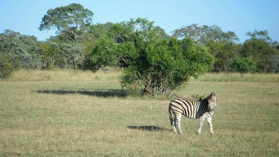 Cheetah Plains: Zebra on game drive