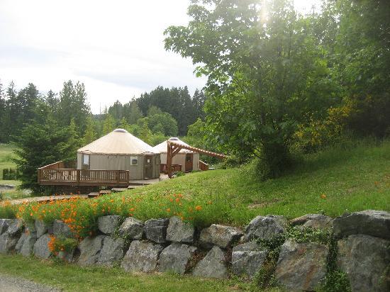 Merridale Bistro: the yurts