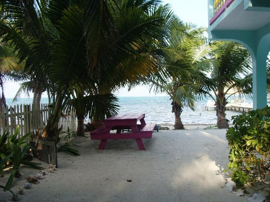 Barefoot Beach Belize: Our view from the back room