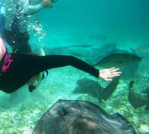 Mario's Tours: snorkeling