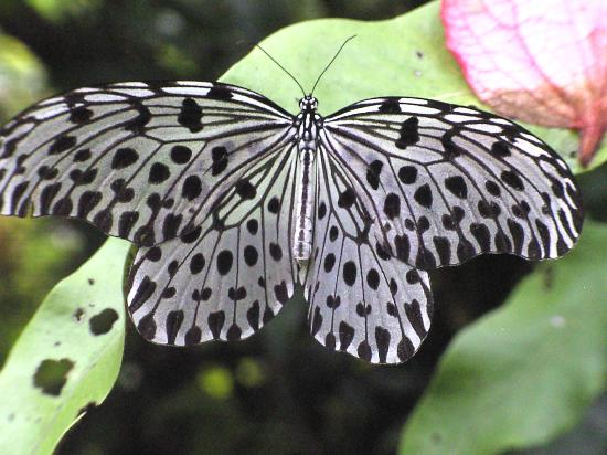 Kuala Lumpur Butterfly Park: butterfly park kl 3