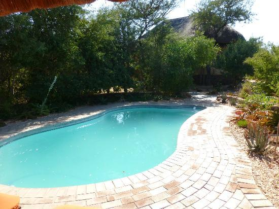 Tshukudu Bush Camp: Pool