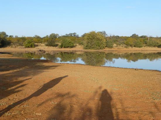Tshukudu Bush Camp: Dam, visited on morning walk