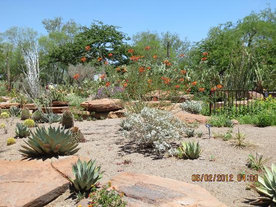 Ethel M Chocolates Factory And Cactus Garden: Cactus Garden