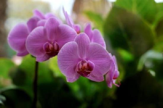 Dolvean House: Orchids