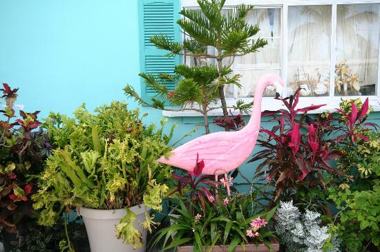 BayView Inn Motel and Marina: Tropical landscaping
