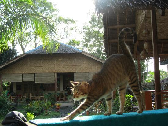 Reggae Guesthouse: Bambou, la mascotte du guest house