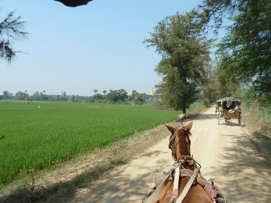 Innwa: Fahrt mit der Pferdekutsche