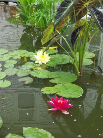 Haven Guest House Bed & Breakfast: Sit by the lily pond