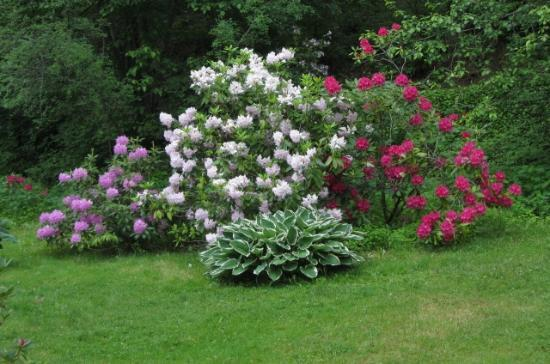 John A. Finch Arboretum: Rhodo and azaleas in the cove, like a fairy land when in bloom