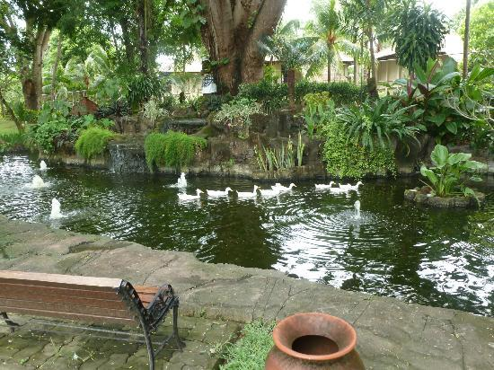 Prama Sanur Beach Bali: Duck Pond in the grounds
