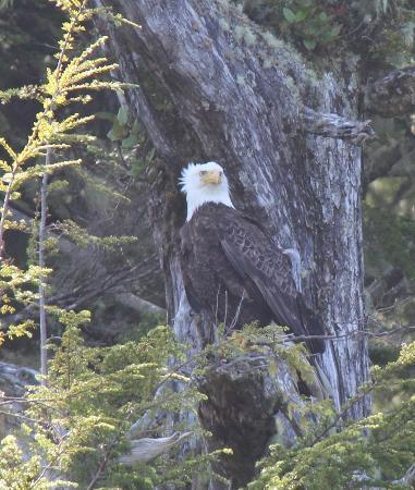 Clayoquot Wilderness Resort: Snapped on a boat trip near the resort.