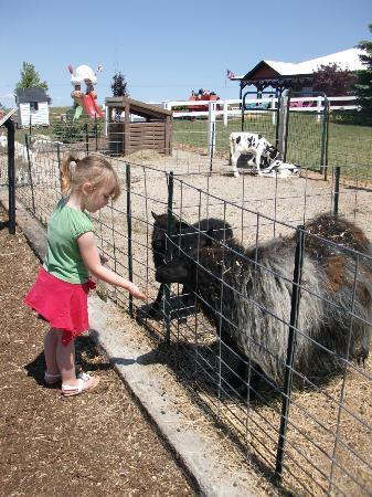Dairy View: Feeding the animals!