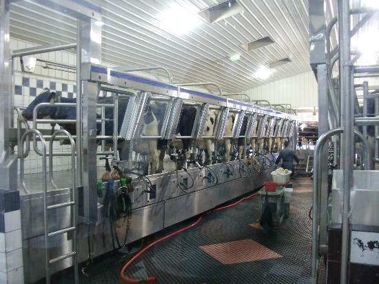 Dairy View: CLEAN CLEAN CLEAN barn area!!!