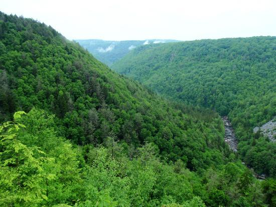 ‪‪Blackwater Falls State Park Lodge‬: View into Blackwater Canyon from lodge overlook‬