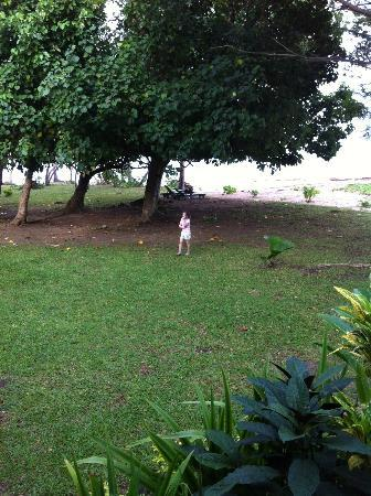 Jean-Michel Cousteau Resort: Large grassy area outside our room where I took yoga class each morning