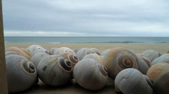 Cisco Beach: Shells
