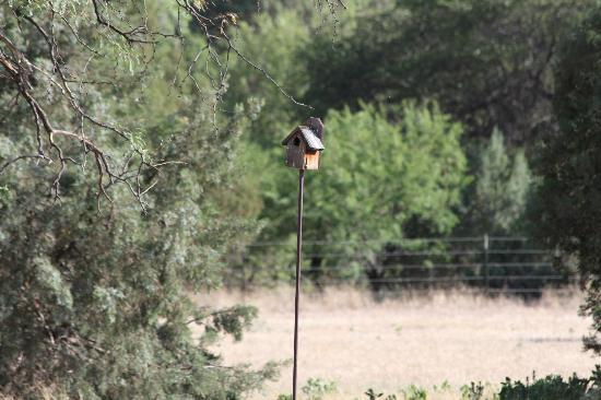 Sunglow Ranch - Arizona Guest Ranch and Resort : One of the many view of the wild life you will see !!