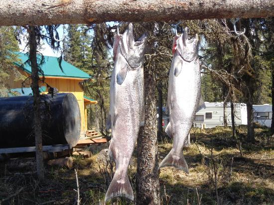 Crooked Creek Retreat & Outfitters: King Salmon caught on Kenai River