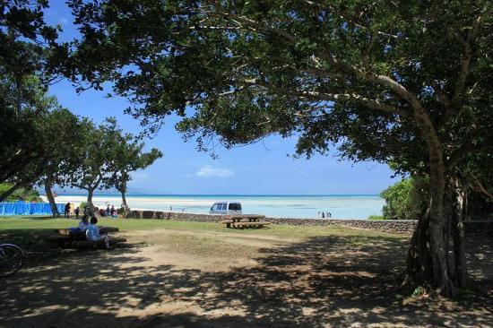 Kondoi Beach : 木陰はビーチの近くです