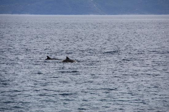 Bluesun Resort Bonaca: Dolphins. Have seen when walked on beach promenade