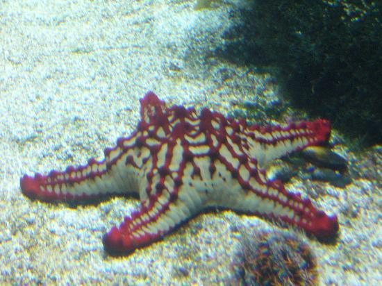 233 toile de mer picture of aquarium la rochelle la rochelle tripadvisor