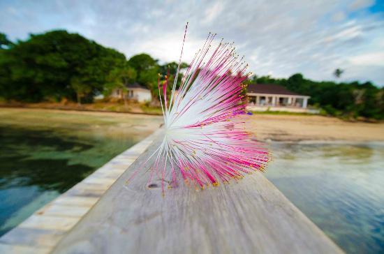 Reef Resort: Local Flora