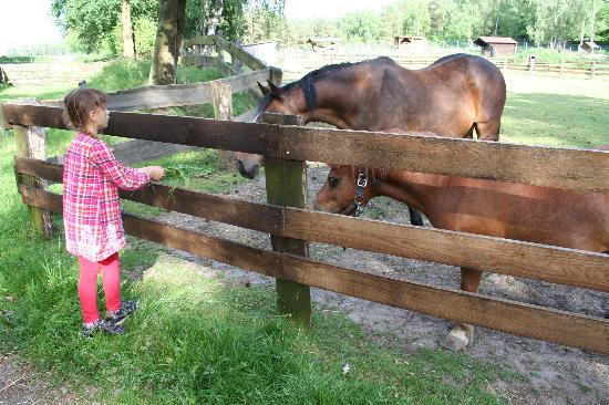 Oberohe, Alemania: Petting Zoo