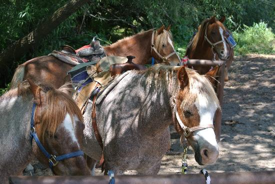 Wellsville, UT: Ponies waiting for riders