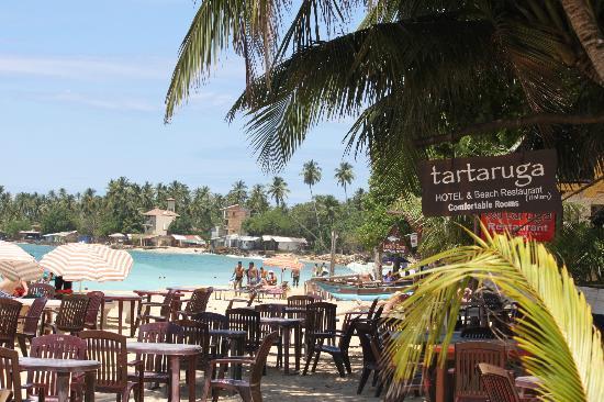 Tartaruga Hotel & Beach Restaurant: vista dalla spiaggia del Tartaruga
