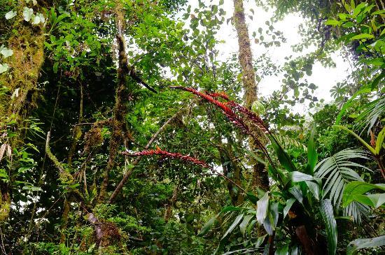 Hotel Fonda Vela: Reserva de Monteverde