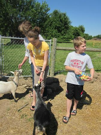 Orchard House Bed and Breakfast: Feeding the animals