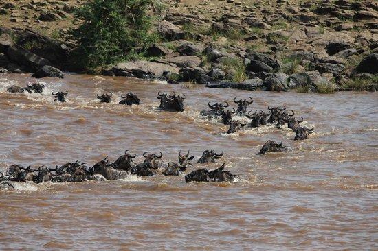 Julius Tact Safaris : Masai Mara