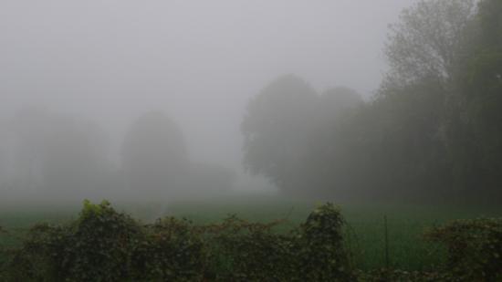 Broglie, Francja: Early in the morning, surroundings La Pilette