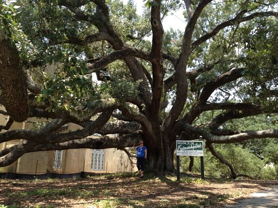 Long Beach, MS: friendship oak