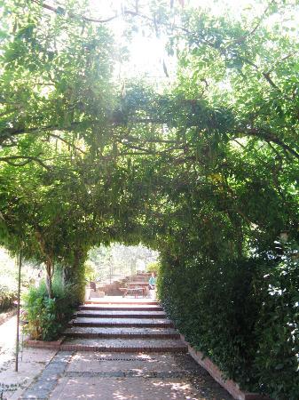 Agriturismo La Casa Del Ghiro: viale