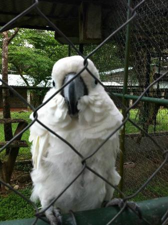El Nispero Zoo and Botanical Garden : Oiseau