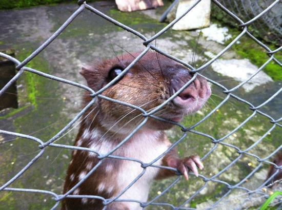 El Nispero Zoo and Botanical Garden : Animal je ne me souvient plus du nom