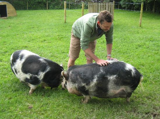 Tredethick Farm Cottages: Farmer Tim and pigs
