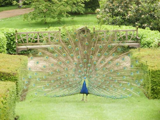 The peacock garden picture of warwick castle warwick for Gardening 4 you warwick