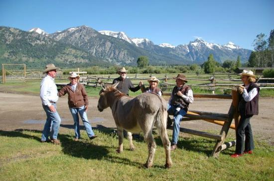 R Lazy S Ranch: staff, guests, and two donkeys gathered at corral