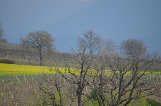 Le Logge di Silvignano: Italian landscapes.....springtime