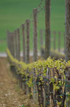 Le Logge di Silvignano: Regional Vineyards