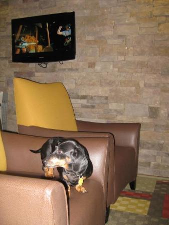 Red Roof Inn Locust Grove: lobby (pet friendly!)
