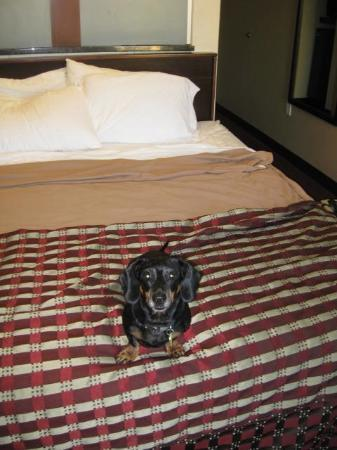 Red Roof Inn Locust Grove: Room #105...thanks for being pet-friendly!