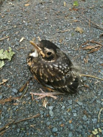 Delaware Canal: A baby bird on the trail.