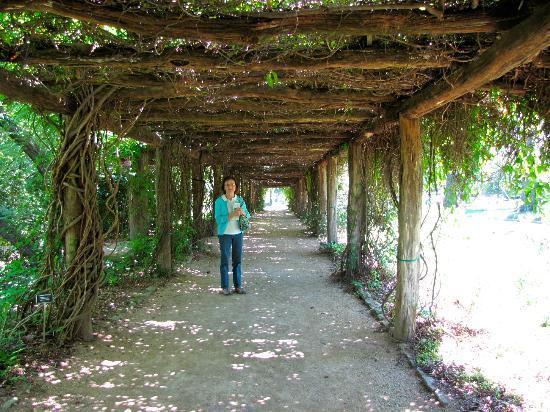 Coker Arboretum: An Arbor in the Arboretum